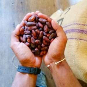 Guittard cocoa beans
